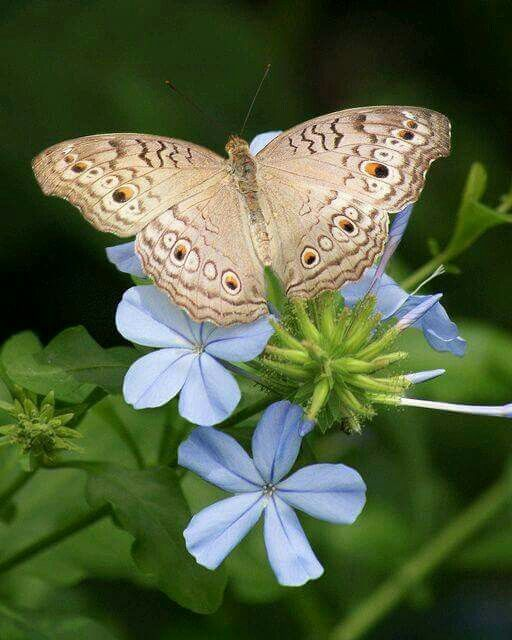 """Résultat de recherche d'images pour """"photos papillons et fleurs"""""""