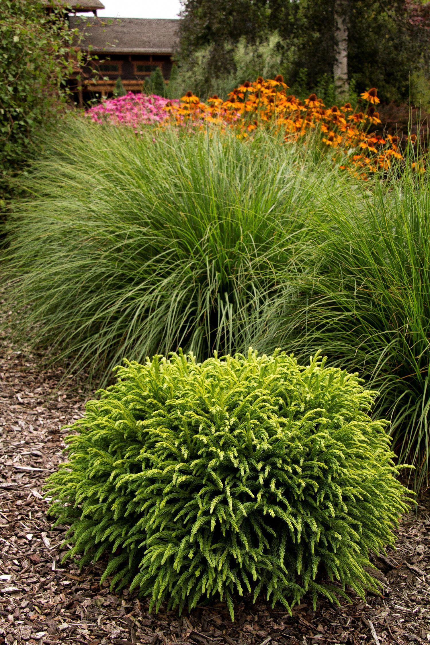 Landscape Design Drylandscapegarden Japanese Garden Plants Plants Japanese Garden Design