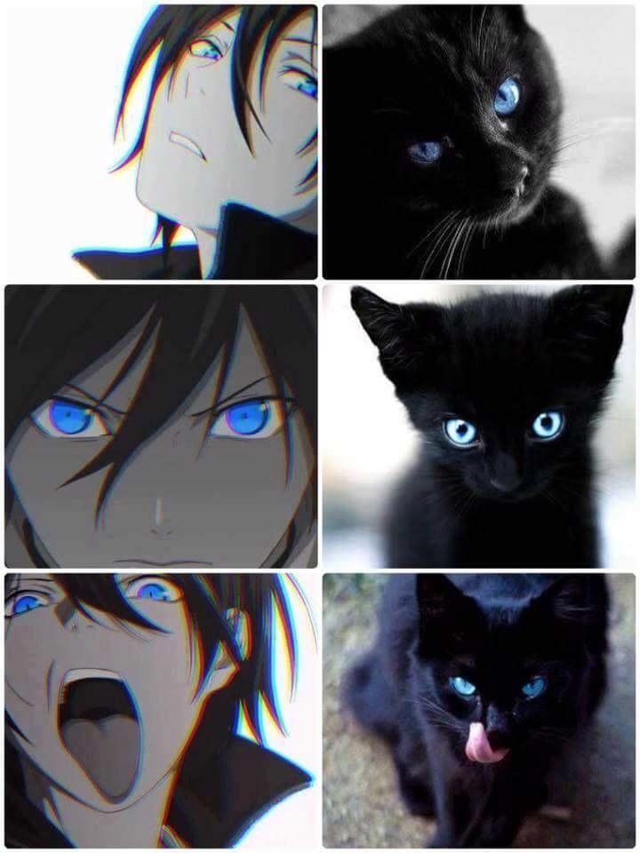 Ято кот
