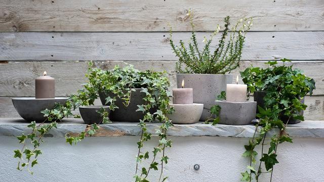 Pflanzen und kerzen passen sehr gut zusammen for Zimmerpflanzen dekorieren