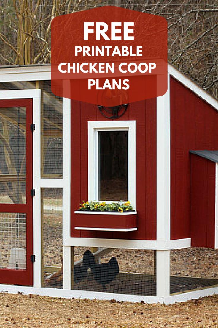 Build Your Own Custom Chicken Coop Chickens Backyard Chicken