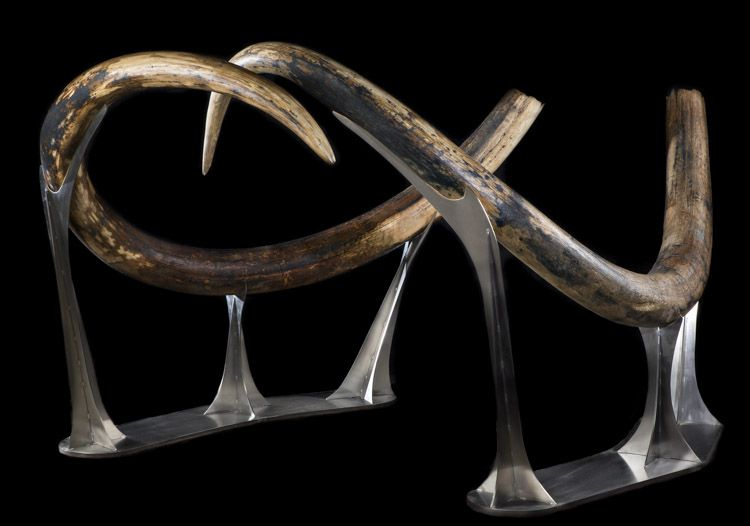 Largest Matched Pair of Woolly Mammoth Tusks in the World