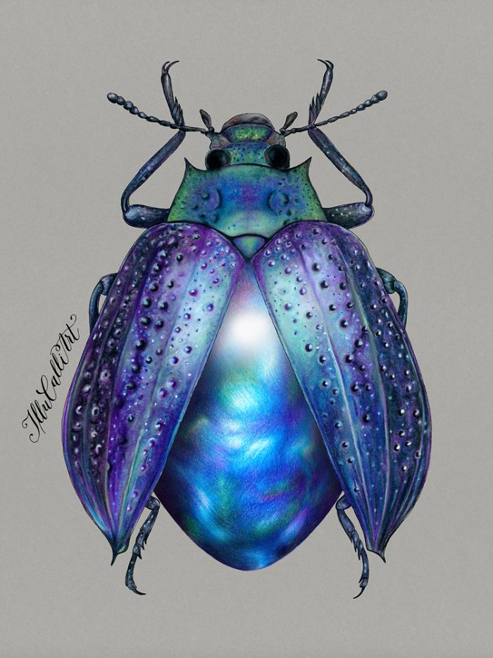 I Drew Beetles That Hide Colourful Minerals Underneath Their Shiny Wing Cases