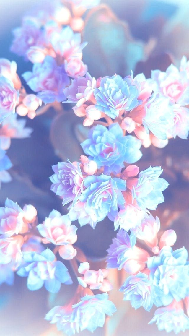 Fond D Cran Fleur Pastel Pingl Par Zineb Djedi Sur Nice Pinterest Cran Fond Ecran Et Fond D Cran Fond D Ecran Pastel Fond D Ecran Colore Fond D Ecran Telephone