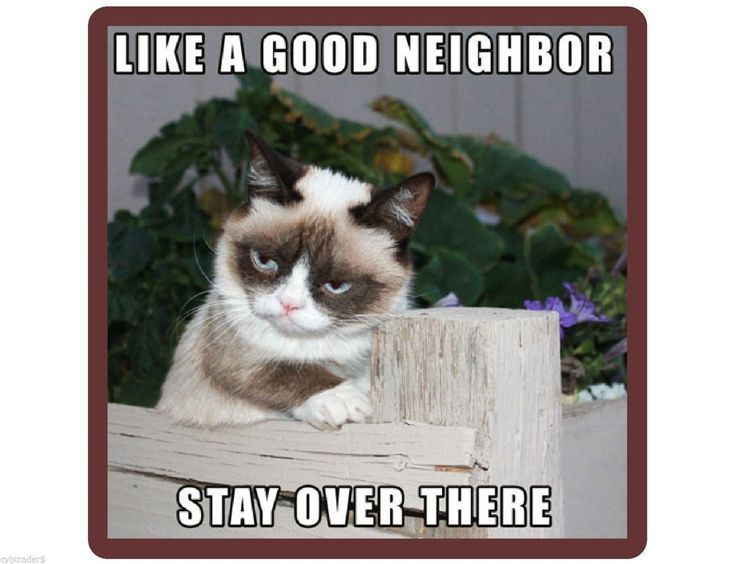 Grumpy Cat Stay Over There Funny Refrigerator Tool Box Magnet Gift Card Insert | eBay