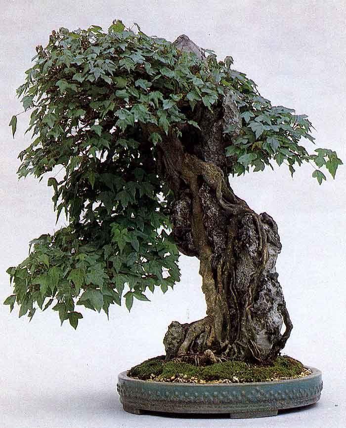 xianger bonsai pinterest mini garten. Black Bedroom Furniture Sets. Home Design Ideas