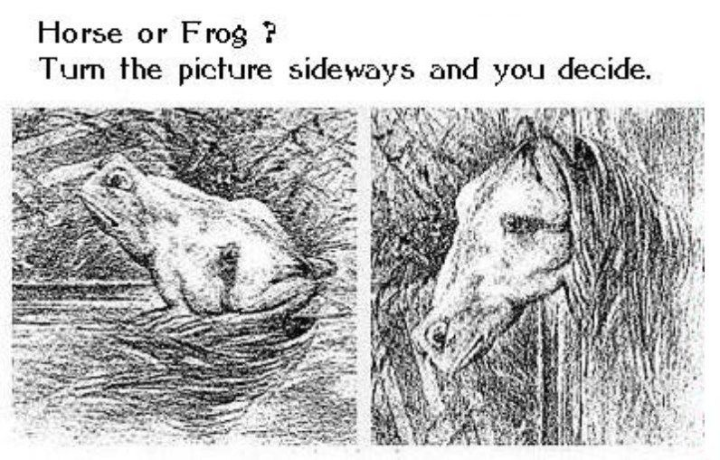 Horse or Frog? Best illusion Pictures Puzzle! | Funny ...