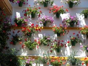 Flores ideales para el verano por su resistencia al calor