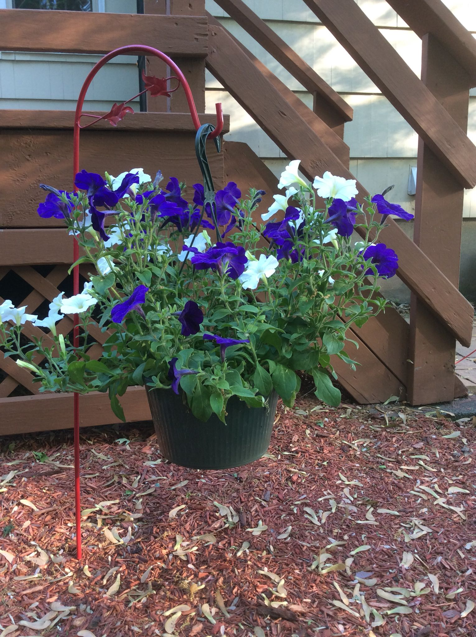 Low hanging plant in flower bed hanging plants plants