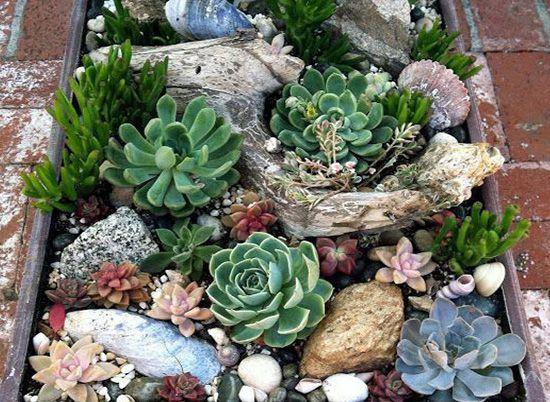diseño jardines suculentas Dstudio | jardin | Pinterest | Cacti and ...