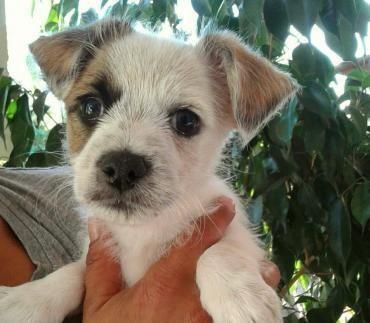 Hund Welpe K A Mischling Hundin 4 Monate Italien Angiolina Susseste Haustiere Haustiere Und Tierbabys