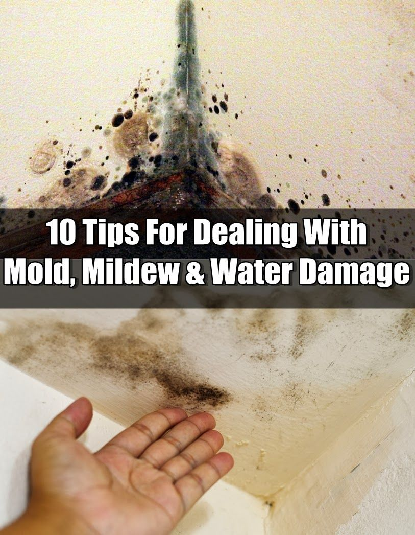 ftc insurance 10 tips for dealing with mold, mildew & water