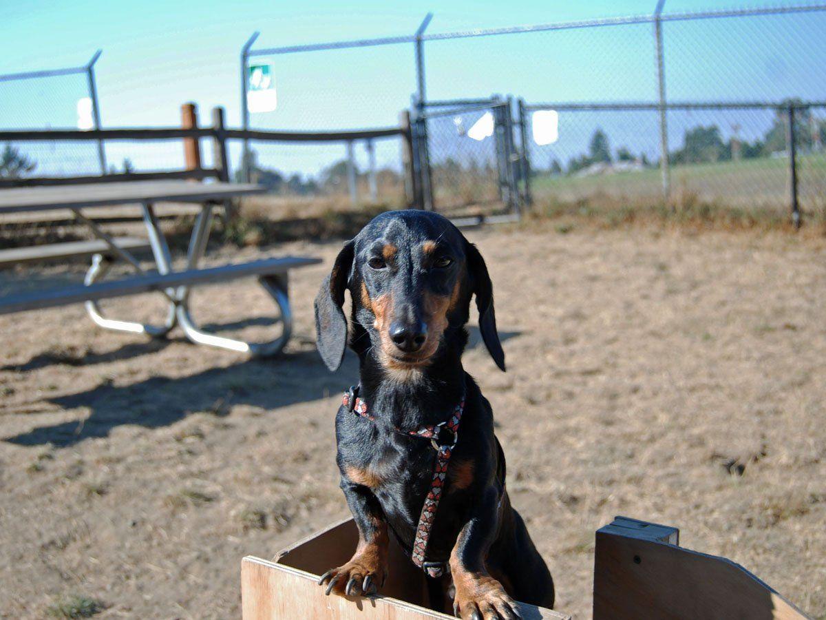 WestCrest Dog Park 5 Seattle Area Dog Parks to Delight