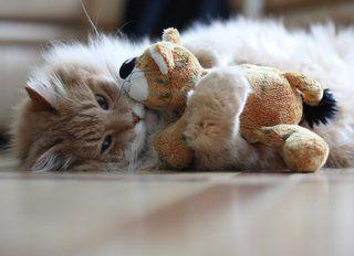 cat photo:  c95632e1.jpg