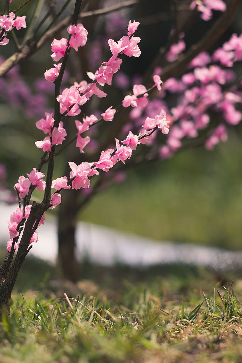 Spring Is Here I Made A Video Tutorial On How To Make A Miniature Sakura Inspired Tree For Figure Photos Sc Cherry Blossom Tree Blossom Trees Miniature Trees
