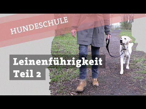 Leinenfuhrigkeit Trainieren Teil 2 Hund Bei Fuss Laufen Beibringen Tipps Tricks Hunde Lustige Welpen Hunde Erziehen