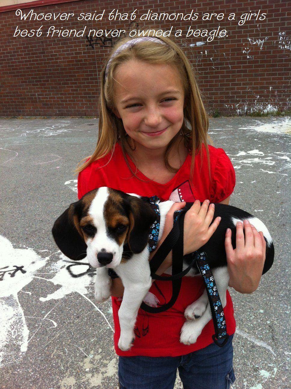 Diamonds. Close Cute Beagle Puppy Dogs