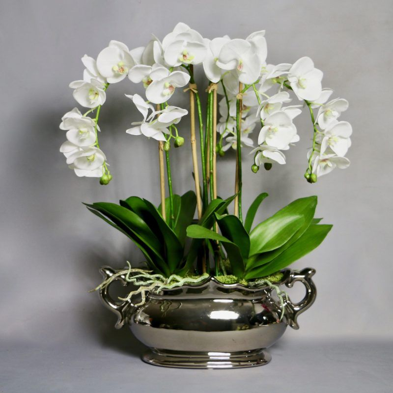 Httpsdemmeryswhite Artificial Phalaenopsis Orchids Silver
