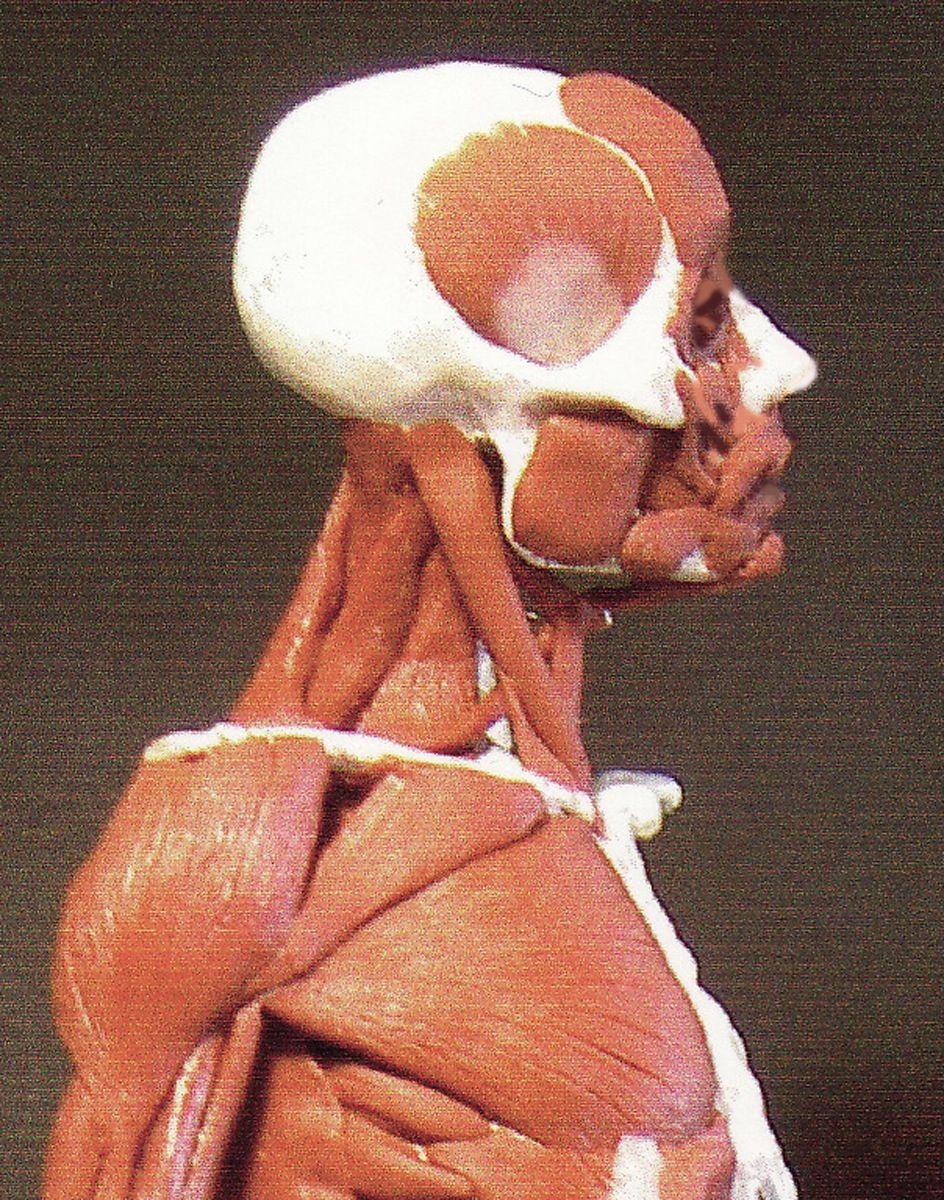 Rey Bustos 3d Anatomyecorche Fridays Laafaclasses