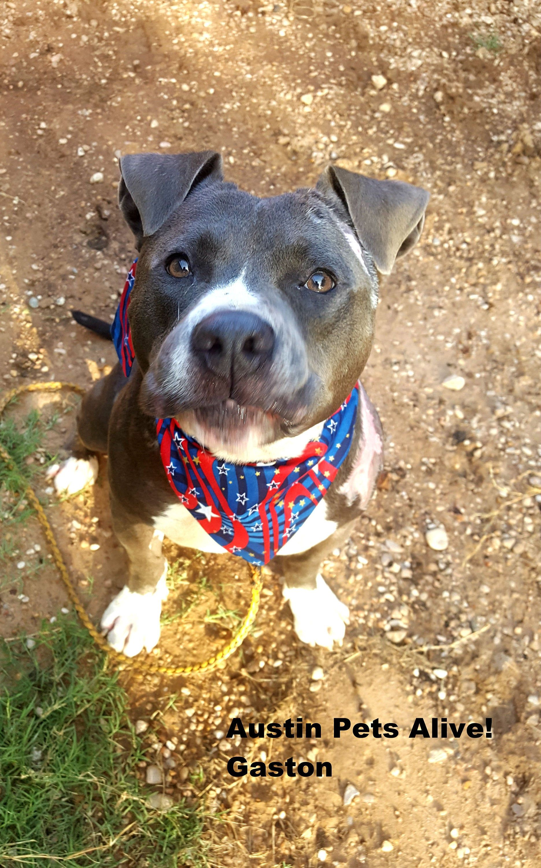 Dog Bandana Tie On Reversible Patriotic Print In 2020 Dog