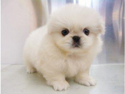 Puppies」おしゃれまとめの人気アイデア|Pinterest |Jannelle