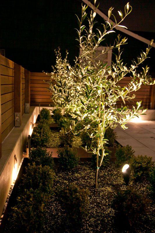 Feature Plant Lighting Outdoor Landscape Lighting Landscape