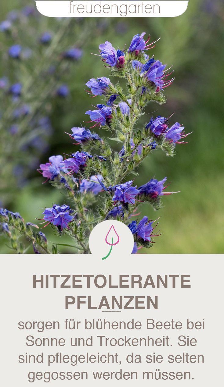 Pflanzen für trockene und sonnige Standorte #patioplants