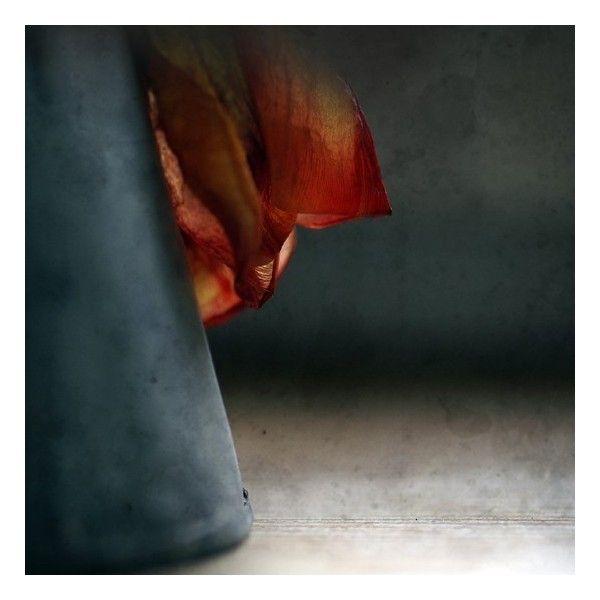 Profumo d'autunno. -Stampa fotografia fine art. 8 x 8 pollici (20 x 20... ($29) ❤ liked on Polyvore featuring home, home decor and retro home decor