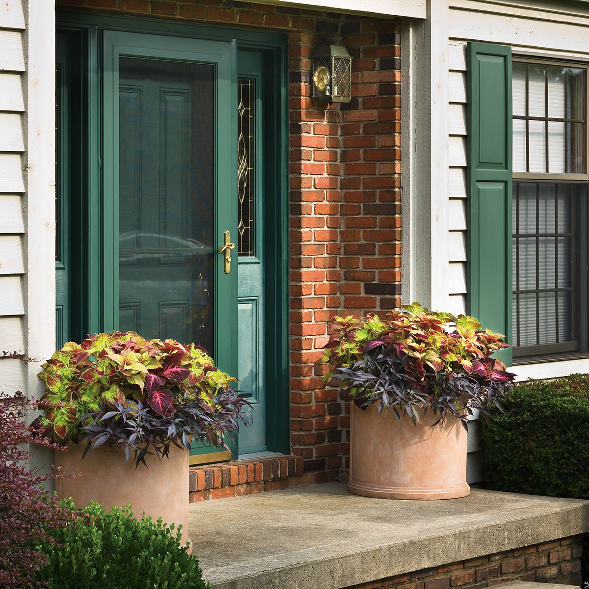 Container Plant Ideas Front Door: Sturdy, Frost-free Containers Like This Can Be Left Out