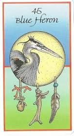 Image result for animal medicine cards