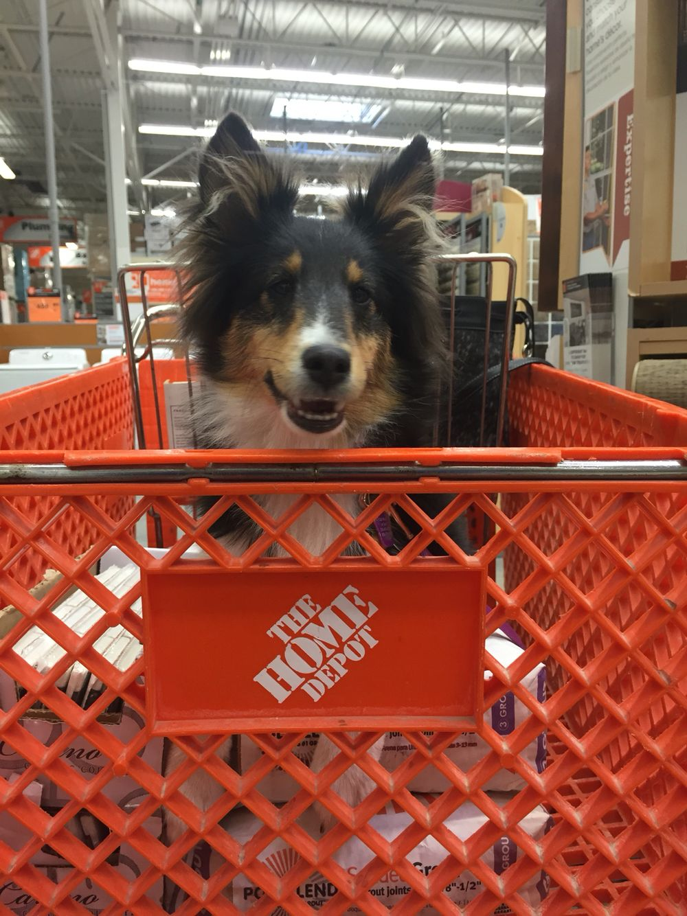 Thank you, Home Depot for being Pet Friendly. San Antonio