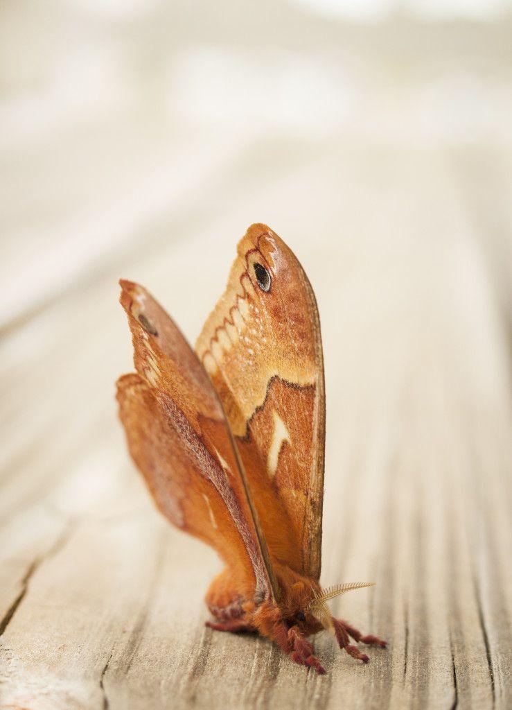 A Moth Tale