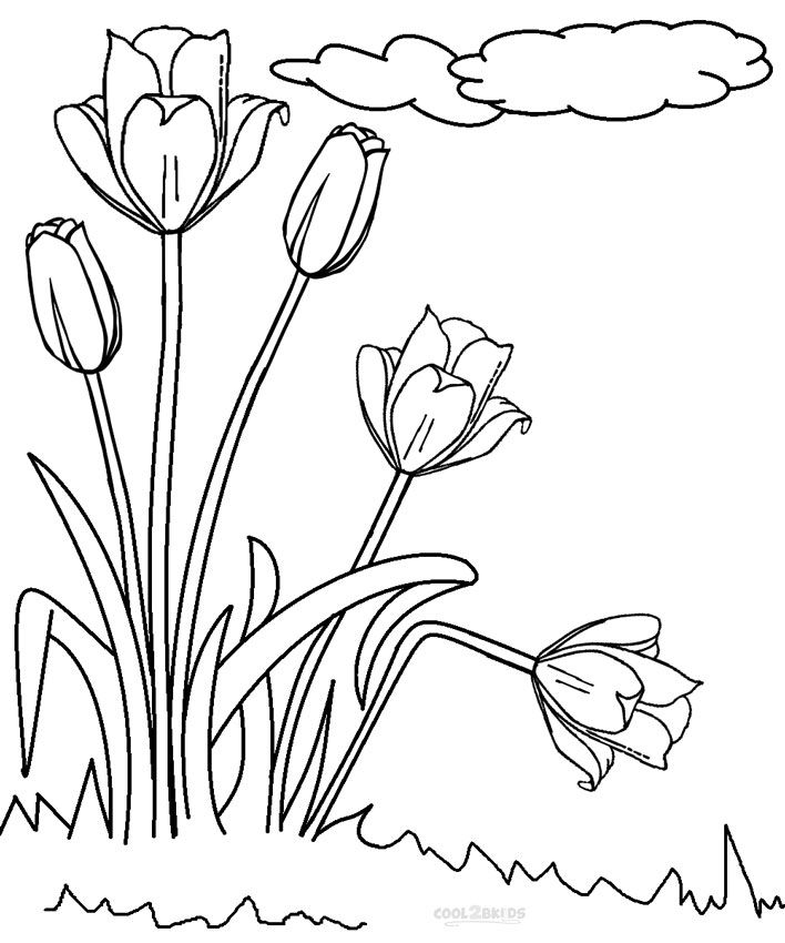 20 Gambar Sketsa Document Tulips Coloring Pages Flowers