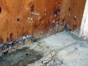 How To Get Rid Of Mold In Basement Mold In Basement Get Rid Of Mold Mold Remover