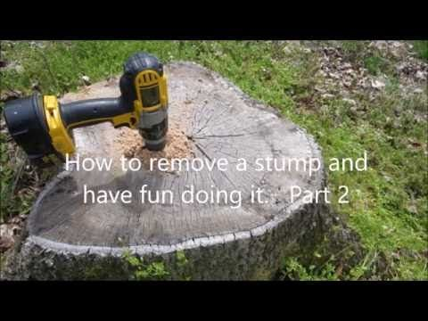 Uprooting A Tree Stump Will Become A Non Issue After You Watch The
