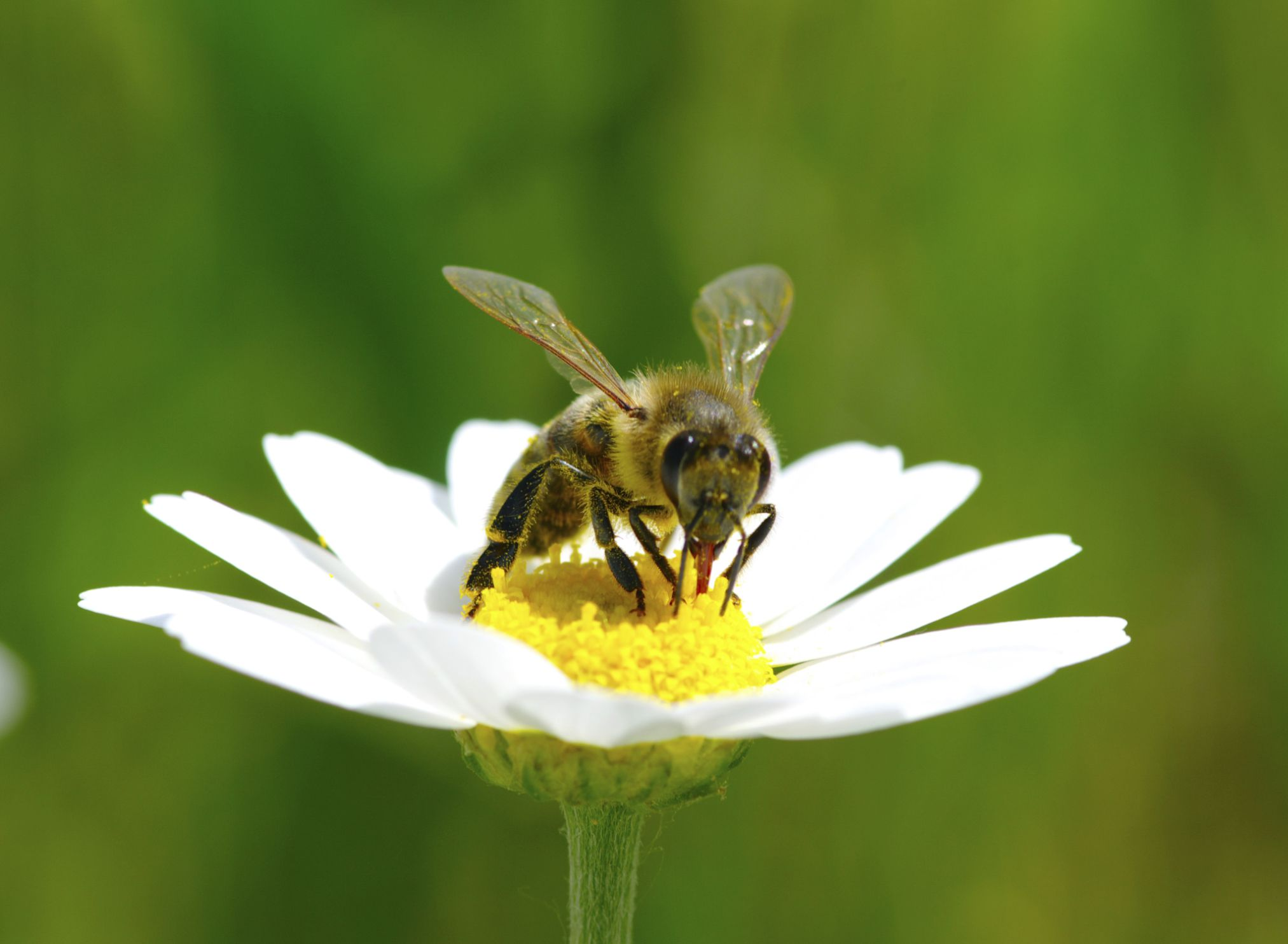Plants That Keep Wasps Away Planting flowers, Plants