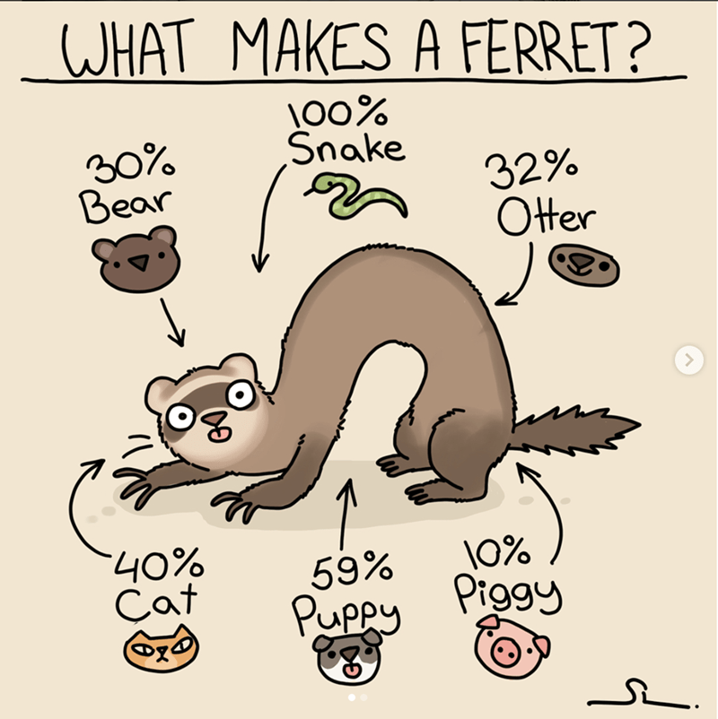 Adorable And Funny Comics About Ferrets That Will