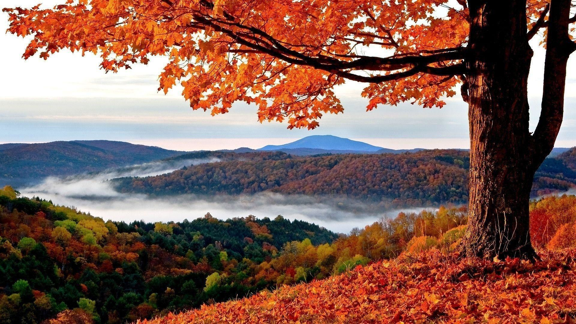 Wallpaper Collection 37 Best Free Hd Autumn Desktop Wallpaper Background To Download Pc In 2020 New England Fall Foliage Fall Getaways New England Foliage