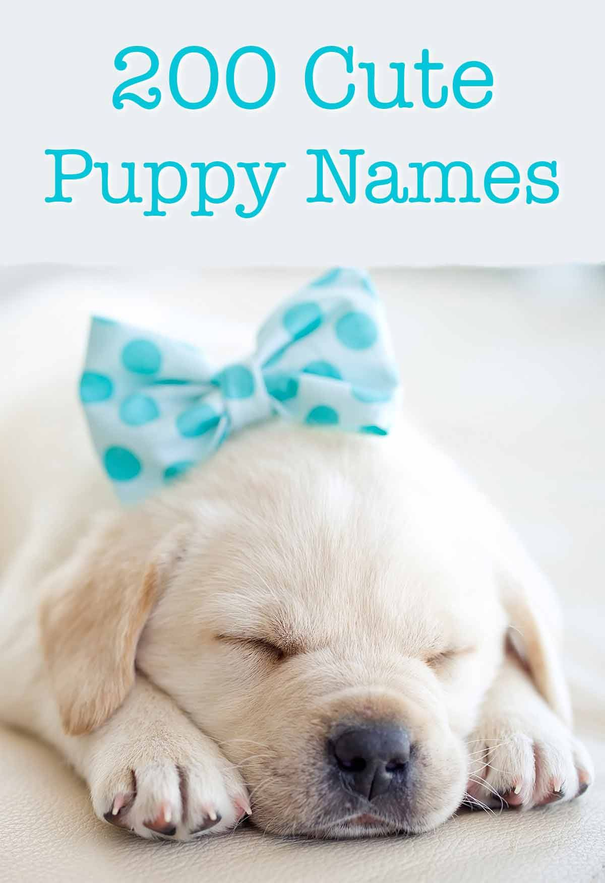 Cute Puppy Names Over 200 Adorable Ideas For Naming Your Dog In 2020 Cute Puppy Names Puppy Names Puppies Names Female