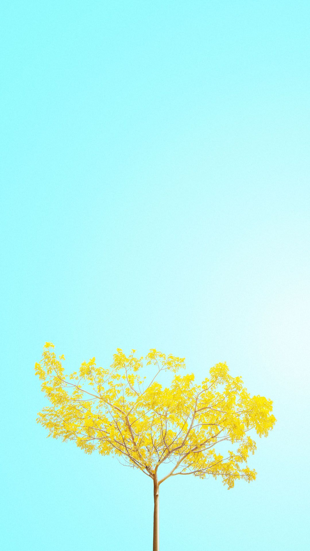 Yellow Floral Wallpaper Phone