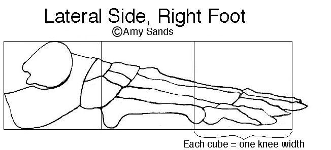 5 PART THREE Feet Experience Anatomy A. Sands