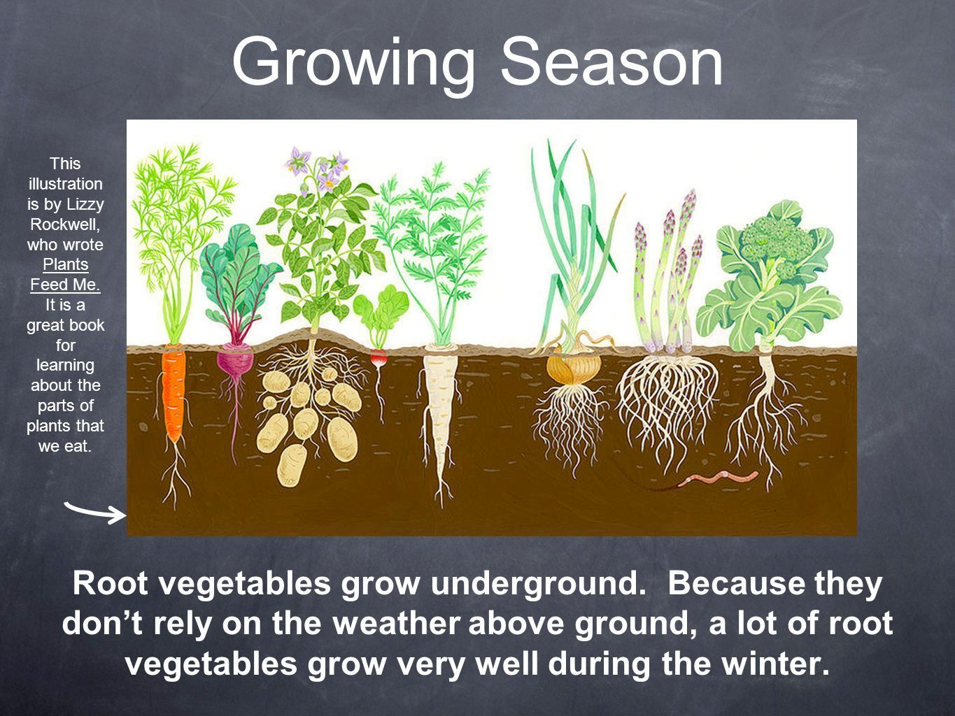 Image Result For Beet Seeds Growing Underground Vegetable Pictures Growing Vegetables Gardening For Kids