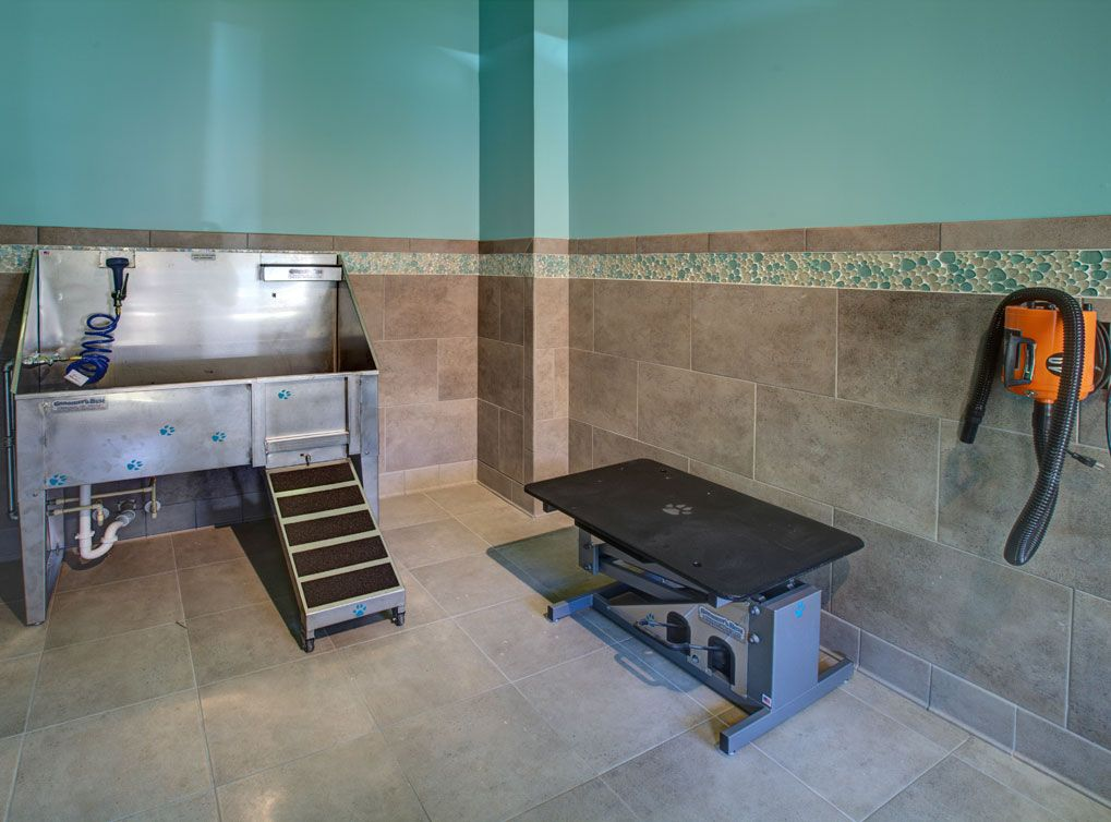 A luxurious pet spa for amli at barret residents a luxury apartment a luxurious pet spa for amli at barret residents a luxury apartment community in kennesaw solutioingenieria Gallery