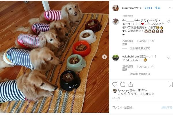 福岡 犬と行けるドッグカフェ人気おすすめ12選 おしゃれで可愛い店舗を紹介 Inunavi いぬなび 犬 いぬ 可愛い