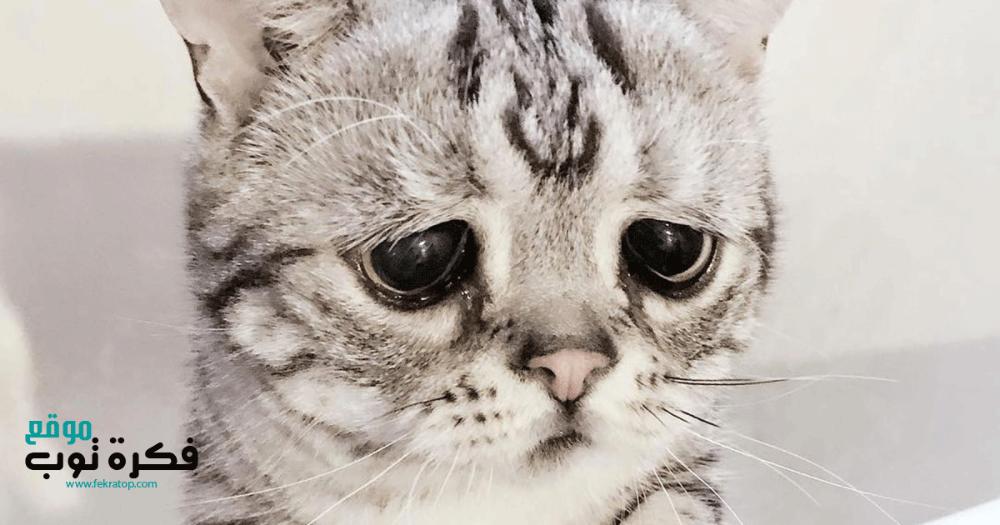 صور وخلفيات قطط حزينة تجنن Hd متحركة للموبايل 4 Cute Cats Cats Cat Love