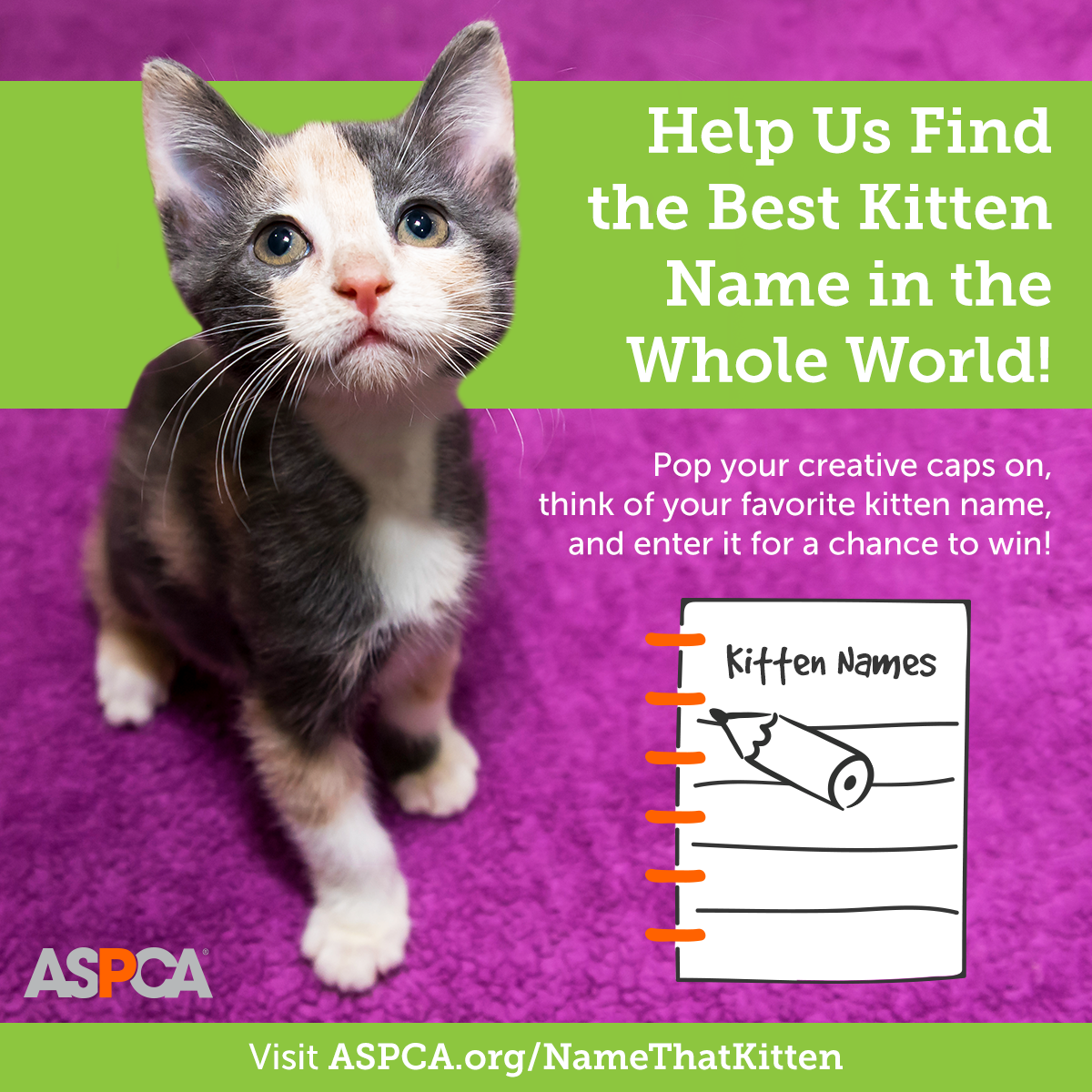 Cast Your Vote for the BEST Kitten Name in the World