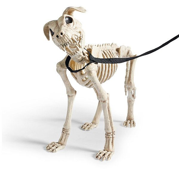Shadow the Skeleton Dog on Leash Halloween decorations, For dogs