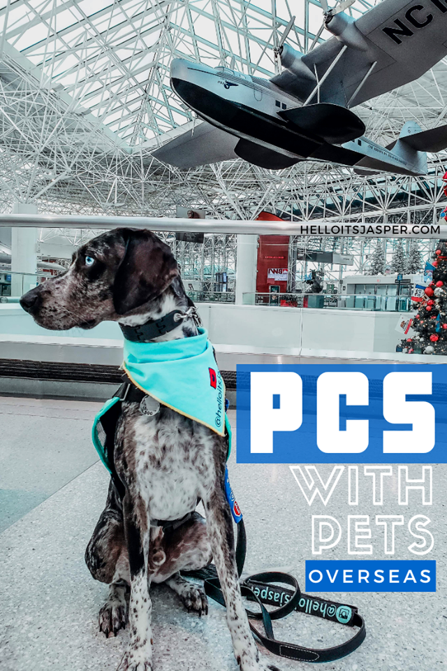 A quick guide for PCSing with pets (overseas). This step