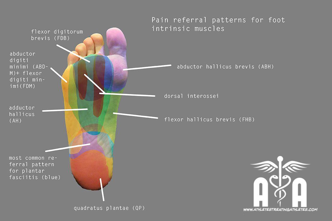 Localización de los músculos en la planta del pie