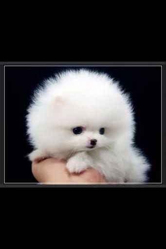 super fluffy dog